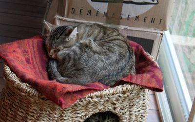 Evelyne Lachaux - Chat déménage...Chat cartonne...Chat dort...Chat vous regarde ???
