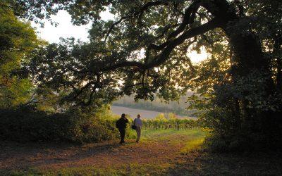 Jean-Seunes - Promenade au soleil couchant